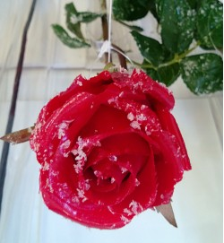 Lumine roos